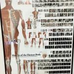 筋肉の方向性を知る